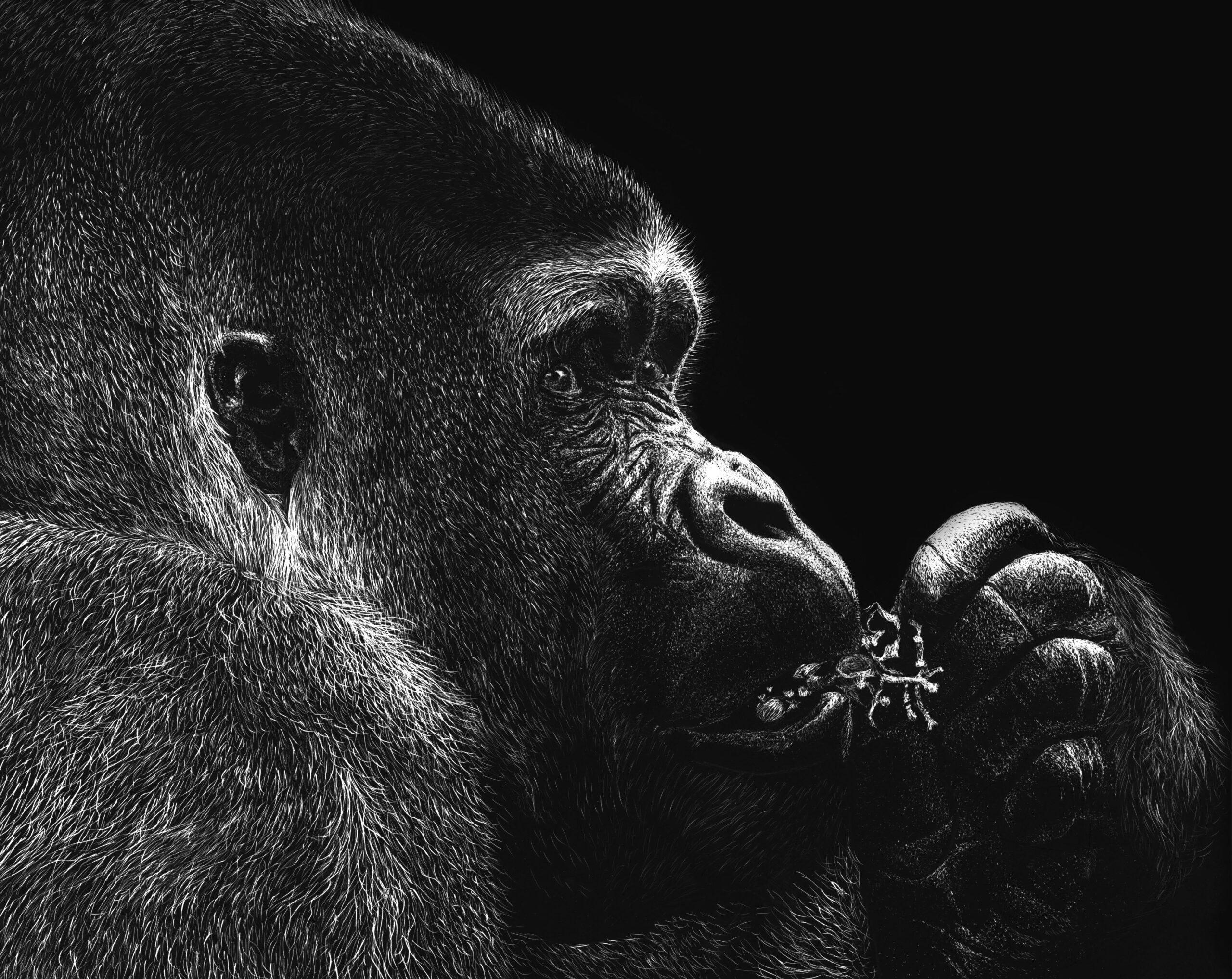 control-gorilla